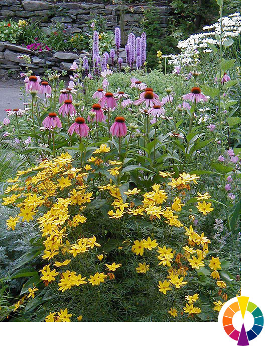 Explore Cornell Home Gardening Using Color In Flower Gardens