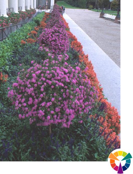 Explore Cornell Home Gardening Using Color In Flower Gardens