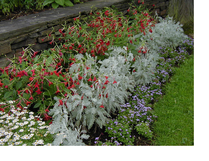 Explore cornell home gardening using color in flower gardens you can use neutral colors as punctuation in the garden here gray foliage plants and white flowers are useful to help separate combinations of plants mightylinksfo Image collections