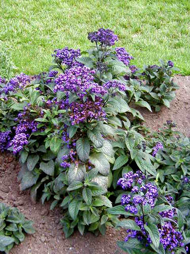 Explore Cornell - Home Gardening - Flower Growing Guides ...