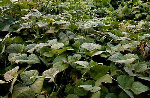Explore Cornell - Home Gardening - Vegetable Growing Guides ...
