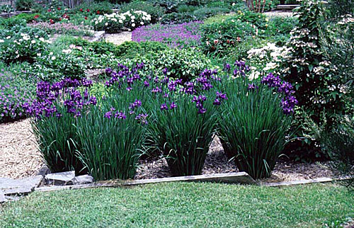 Explore Cornell Home Gardening Flower Growing Guides Growing