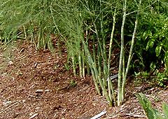 plant thumbnail